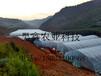 山西几型钢日光大棚塑料大棚造价镀塑钢管大棚