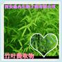 淡竹叶/竹叶黄酮/竹叶提取物10:1森冉生物清热除烦图片