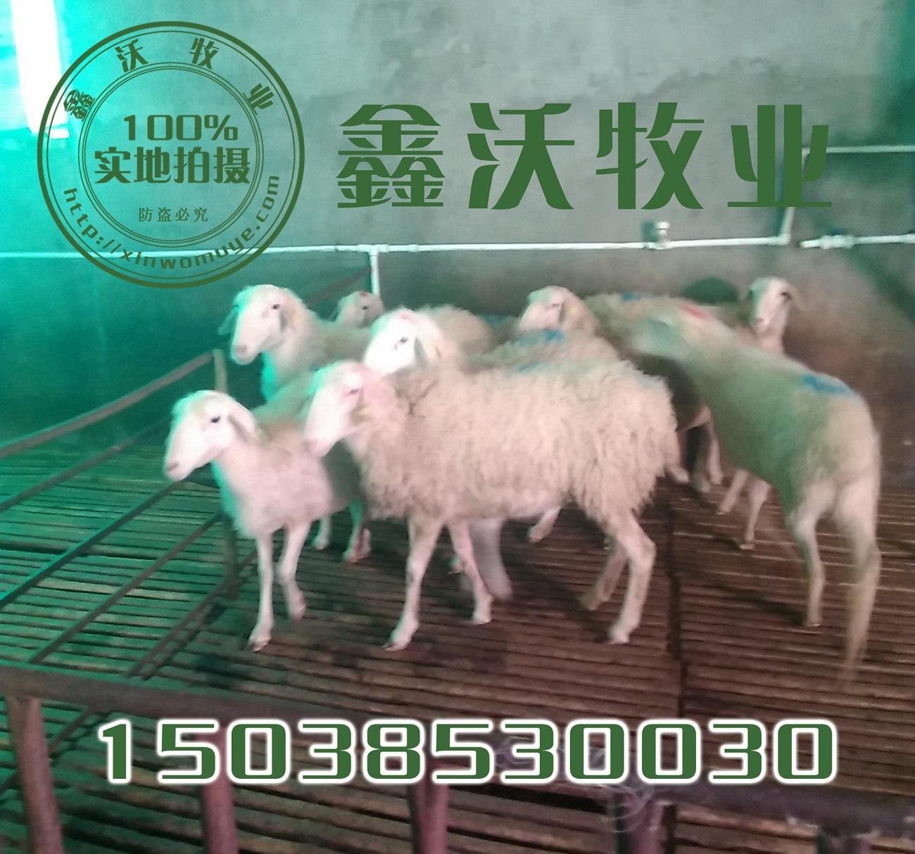 羊肉大理石花纹图片
