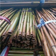 供应优质豆架杆种植豆角的搭架竹竿