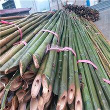 冬瓜架竹竿冬瓜架竹杆厂家大量批发冬瓜搭架子用的竹竿
