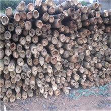 批发供应3米4米5米6米7米8米9米毛竹