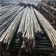 哪里有5米竹竿买5米竹杆苦竹园林竹竿