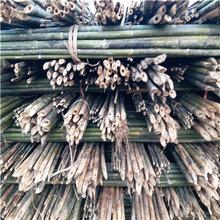 大量批发5米竹竿5米竹杆