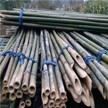 批发6米竹竿树木支撑果蔬大棚食用菌搭架竹竿
