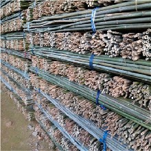 批发2米5圣女果支撑架竹子