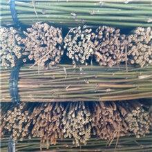 供应优质菜架竹竿