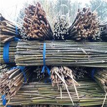 供应2.4米、3米菜架竹菜架竿竹架条