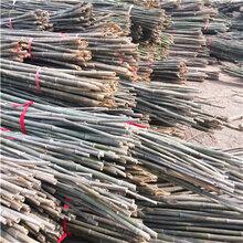 3米小竹竿批发3米菜架竹菜架杆3米竹架条