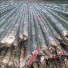 大量供应6米竹竿树木支撑果蔬大棚竹竿