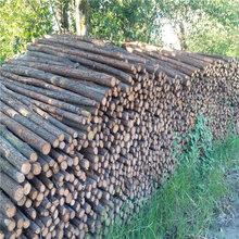大量批发杉木杆2米3米4米绿化支撑杆