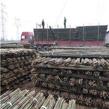 京西竹业竹制品菜架竹竹杆批发价格从优