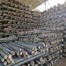 厂家批发2米-3米树木支撑杆绿化支撑杆