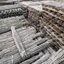 白竹批发江西白竹3米4米5米白竹杆厂家批发