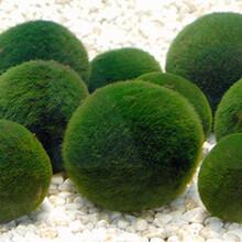 绿藻提取物小球藻提取物破壁小球藻粉10:1专业厂家提取