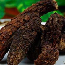 森冉生物厂家热销肉松蓉提取物/肉从蓉提取物10:1