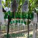 透气葡萄袋厂家专供大棚透光透气葡萄套袋
