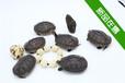 供应2015年越南种石龟