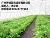 温室大棚厂家供应[广西蔬菜温室大棚]建设