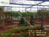 温室大棚—佛山展览温室、景观温室