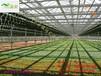 蔬菜大棚造價每畝
