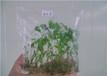 广西益农富植物科技有限公司牛大力种子,牛大力种苗,白芨种子,白芨种苗,巴西人参种子,巴西人参种苗