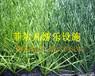 重庆人造草坪生产厂家——专业铺设人造草坪