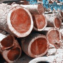 广州南沙木材进口报关行巴西龙凤檀板材进口清关公司图片