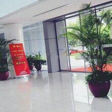 郑州双喜花卉十年品牌专注花卉租赁
