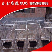 母猪产床双体产床定位栏保育床
