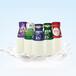 三色鸽瓶装酸牛奶招商加盟送奶到户渠道商