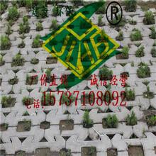 洛陽水泥護坡磚453010、生態混凝土護坡磚、廠家供應圖片