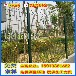 汕尾隔离围栏围墙防护栏深圳绿化带隔离栏质量保证铁丝护栏