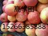 常年供应山东冷库苹果另早熟苹果大量上市
