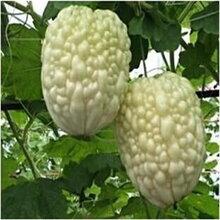 新型瓜果種子口感脆甜多汁的蘋果苦瓜種子圖片