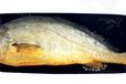 郑州专做冷冻食品批发的市场