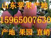 日照市莒县红富士苹果价格