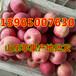 山东红富士苹果批发价格后期苹果价格走势
