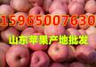 山东水晶富士苹果批发价格