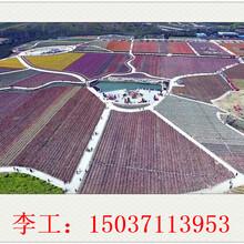 兴山县可研报告价格¥写的专业公司图片