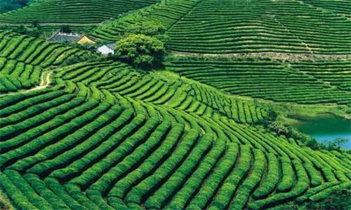 左贡县商业计划书写