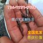 供应广东阳江,淡水石斑鱼苗,大口鲶鱼苗,叉尾鱼苗图片