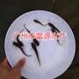 广东东莞深圳钳鱼苗珠海中山斑点叉尾鮰鱼苗图片