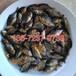 全国空运福建武夷山淡水白鲳鱼苗养殖基地红鲳鱼苗批发淡水白鲳鱼苗出售
