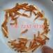 廣西梧州歐洲丁桂魚苗養殖基地丁桂魚苗批發丁桂魚苗出售