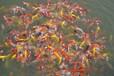 湖南锦鲤--5月的期待