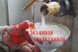 天阳电动自熟碗团机家用碗托机工艺自熟碗凸机报价