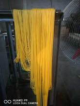 家用畅销电动玉米面条机钢丝面机现货订购冷面机价格图片