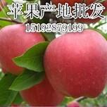 南市区红星苹果购销中心图片