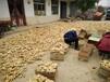 今日生姜价格走势最新黄姜、面姜、小黄姜、生姜价格